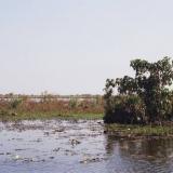 Esteros de Iberá