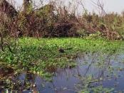 Esteros del Iberá -