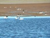 Lago de Tromen