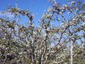 Primavera en Rio Colorado