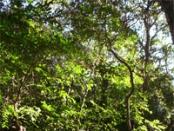 Visitamos el Parque Nacional Mburucuya en Corrientes