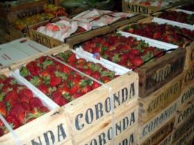 Frutillas de Coronda