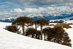 Area Natural Protegida Batea Mahuida, Provincia de Neuquén