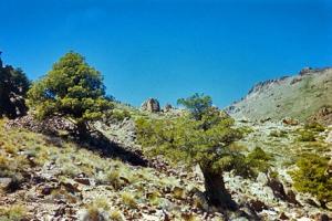 Area Natural Protegida Cañada Molina, Provincia de Neuquén