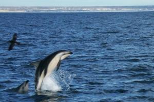 Puerto Madryn, Provincia de Chubut