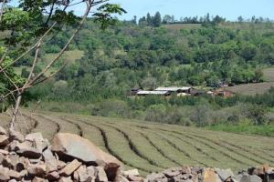 Caa-Yari, Provincia de Misiones