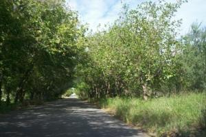 Coneta, Provincia de Catamarca