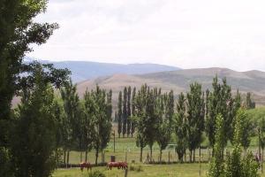 El Cholar, Provincia de Neuquén