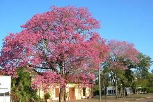 Romang, Provincia de Santa Fe