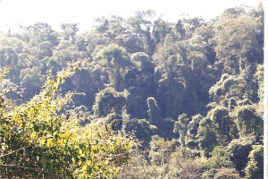 Parque Nacional Calilegua, Provincia de Jujuy