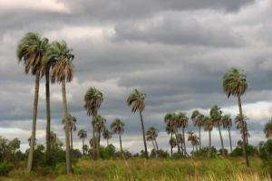 Parque Nacional El Palmar, Provincia de Entre Ríos
