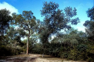 Fuerte Esperanza, Provincia de Chaco