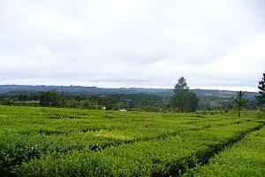 25 de Mayo, Provincia de Misiones