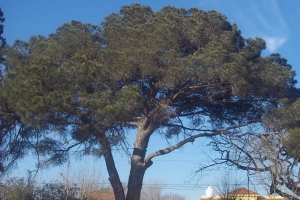 Timbúes, Provincia de Santa Fe