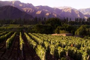 Cafayate, Provincia de Salta