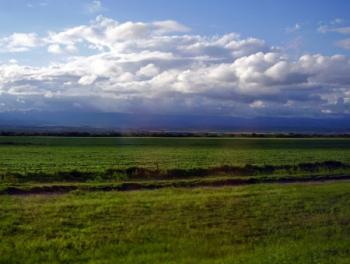 Cultivos en Perico Jujuy