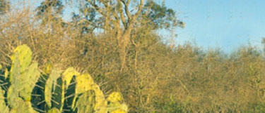Parque Nacional Copo
