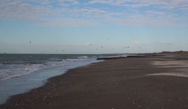 playa y gaviotas