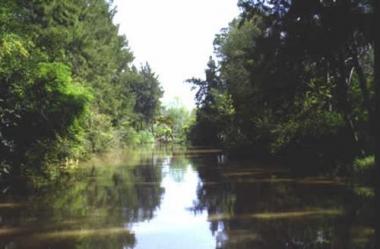 Reserva Natural Bahía Blanca, Bahia Falsa, Bahia verde