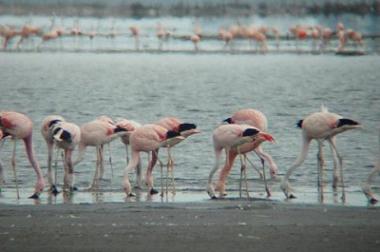 Laguna Melincue