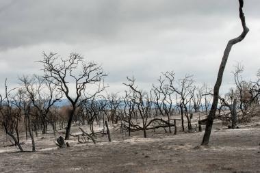 Incendio en La Granja 2013. Foto de Municipio de La Granja