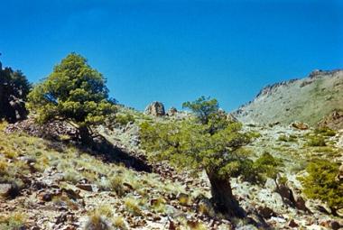 Area Natural Protegida Cañada Molina