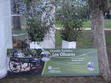 Fiesta Provincial de la Olivicultura