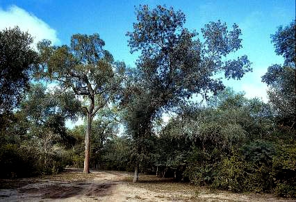 Parque Provincial Loro Hablador.