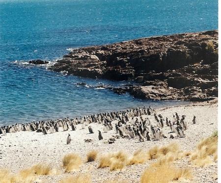 Reserva Faunística Cabo Dos Bahías - Camarones