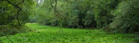 Aves del Litoral en Comarca Bermejo