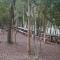 Camping Tropical